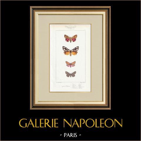 Papillons d'Europe - Chelonia Civique | Gravure originale en taille-douce sur acier d'après A. Noël. Pauquet direxit. Aquarellée à la main. 1834