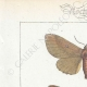 DETAILS 01 | Butterflies of Europe - Bombyx Trifolii