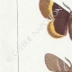DETAILS 02 | Butterflies of Europe - Bombyx Trifolii