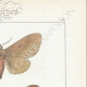 DETAILS 04 | Butterflies of Europe - Bombyx Trifolii