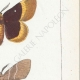 DETAILS 05 | Butterflies of Europe - Bombyx Trifolii