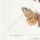 DETTAGLI 03   Farfalle dall'Europa - Bombyx Procèssionnaire