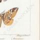 DETTAGLI 06   Farfalle dall'Europa - Bombyx Procèssionnaire