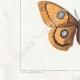 DETTAGLI 03 | Farfalle dall'Europa - Bombyx Carpini