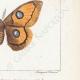 DETTAGLI 06 | Farfalle dall'Europa - Bombyx Carpini