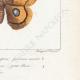 DETTAGLI 08 | Farfalle dall'Europa - Bombyx Carpini