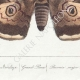 DETAILS 05 | Butterflies of Europe - Bombyx Grand Paon