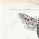 DÉTAILS 01 | Papillons d'Europe - Cossua - Noctua