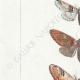 DÉTAILS 02 | Papillons d'Europe - Cossua - Noctua