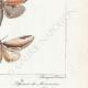 DÉTAILS 06 | Papillons d'Europe - Cossua - Noctua