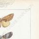 DETTAGLI 04   Farfalle dall'Europa - Noctua - Hepialus - Platypterix