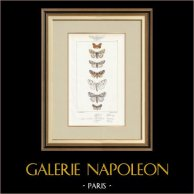 Papillons d'Europe - Nocturne