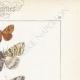 DÉTAILS 04 | Papillons d'Europe - Nocturne