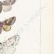 DÉTAILS 05 | Papillons d'Europe - Nocturne