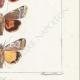 DETTAGLI 06 | Farfalle dall'Europa - Noctua Orbona