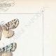 DETTAGLI 04 | Farfalle dall'Europa - Noctua Ludifica