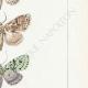 DETTAGLI 05 | Farfalle dall'Europa - Noctua Ludifica
