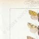 DÉTAILS 01   Papillons d'Europe - Hanthia - Noctua - Plusia