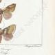 DÉTAILS 06   Papillons d'Europe - Hanthia - Noctua - Plusia