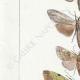 DETAILS 02 | Butterflies of Europe - Noctua - Cucullia - Chrysoptera