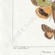 DETAILS 03 | Butterflies of Europe - Noctua - Cucullia - Chrysoptera