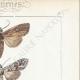 DETAILS 04 | Butterflies of Europe - Noctua - Cucullia - Chrysoptera