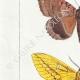 DETTAGLI 02   Farfalle dall'Europa - Noctua - Bombyx