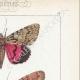 DETTAGLI 04   Farfalle dall'Europa - Noctua - Bombyx