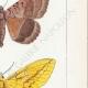 DETTAGLI 05   Farfalle dall'Europa - Noctua - Bombyx