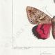 DETAILS 03   Vlinders uit Europa - Noctua