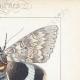 DETTAGLI 04 | Farfalle dall'Europa - Noctua
