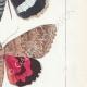 DETTAGLI 05 | Farfalle dall'Europa - Noctua