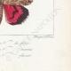 DETAILS 08   Vlinders uit Europa - Noctua