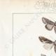 DETAILS 01 | Butterflies of Europe - Noctua - Cucullia - Plusia - Noctua