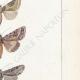DETAILS 05 | Butterflies of Europe - Noctua - Cucullia - Plusia - Noctua