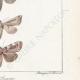 DETAILS 06 | Butterflies of Europe - Noctua - Cucullia - Plusia - Noctua