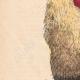DETAILS 02 | Costume of a Wallachian mountain people (Romania)