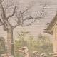 DETTAGLI 01 | Allevamento di struzzi a Toliara - Madagascar - 1909