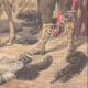 DETTAGLI 06 | Allevamento di struzzi a Toliara - Madagascar - 1909