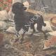 DETTAGLI 05 | Fedeltà di un cane sulla tomba del suo padrone - Île-de-France - 1909