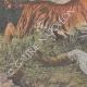 DETTAGLI 02   Un uomo attaccato da una tigre in Congo - 1909