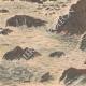 DETTAGLI 05 | Un uomo normanno naufragato su una roccia presso le Minquiers - Jersey - 1909
