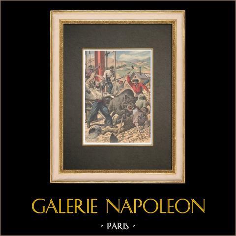 Caza de jabalí en la estación de Neussargues - Francia - 1909 | Grabado xilográfico original impreso en cromotipografia. Anónimo. Reverso impreso. 1909
