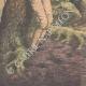 DETTAGLI 05   Due ubriaconi coprono un ragazzo col formice in Eymoutiers - Francia - 1909