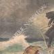 DETTAGLI 01 | Un giaguaro in libertà sul ponte di una nave, sbarca a New York - 1909