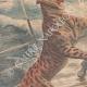 DETTAGLI 02 | Un giaguaro in libertà sul ponte di una nave, sbarca a New York - 1909
