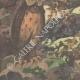 DETTAGLI 05 | Chantecler - Edmond Rostand - Uccelli da notte - Parigi - 1910