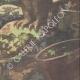 DETTAGLI 06 | Chantecler - Edmond Rostand - Uccelli da notte - Parigi - 1910