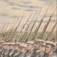 DETTAGLI 03 | Festa nazionale francese - Rivista militare degli Fusiliers marins - Parigi - 1910