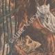 DETTAGLI 02 | Morte degli animali della menagerie nel fuoco alla Esposizione di Bruxelles - Belgio - 1910